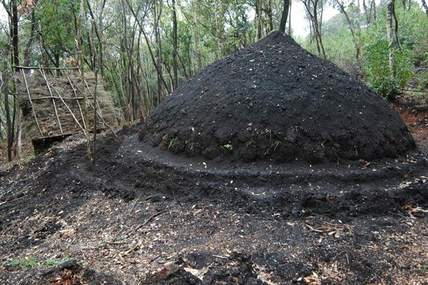 Carbonaia terra