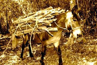 Il trasporto della legna